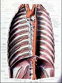 Нормальная аорта